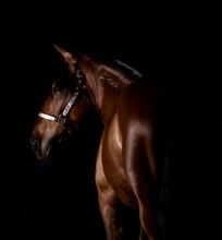 Horse In Studio