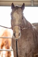 Horse On Cross Ties