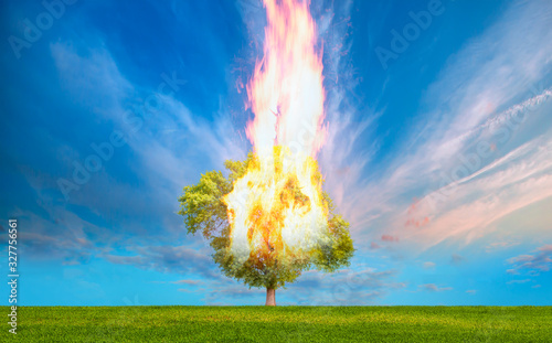 Burning Tree on fire at day with stormy sky Fototapete