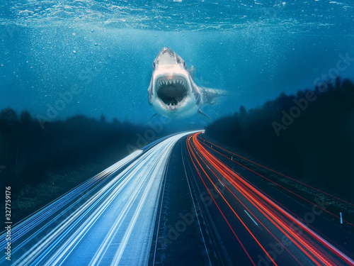 Photo The way og the shark