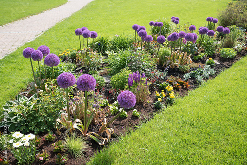 Photo summer flower bed with alliums, green meadow and walkway