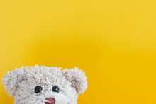 Teddy Bear Plays Hide And Seek...