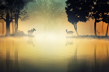 Tree And Deer In The Fog