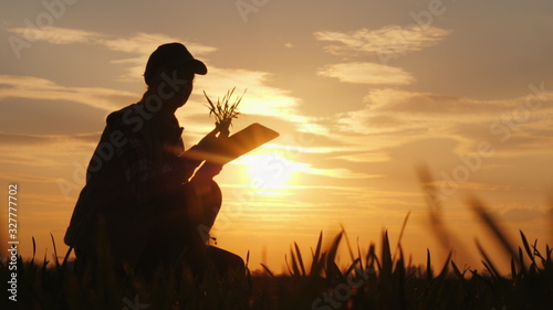 Fototapeta A woman farmer studying the seedlings of a plant in a field, using a tablet obraz