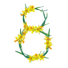 Floral Illustration Of Natural And Yellow Narcissus Flowers In 8 Number Form. Classic Decoration For Women's Day 8 Of March. Watercolor Hand Painted Isolated Elements On White Background.
