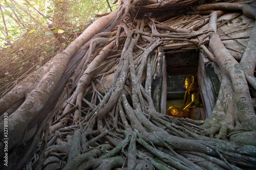 Photo Ancient golden buddha statue in church, ancient temple is Wat Bang Kung, outside is covered with root of banyan tree
