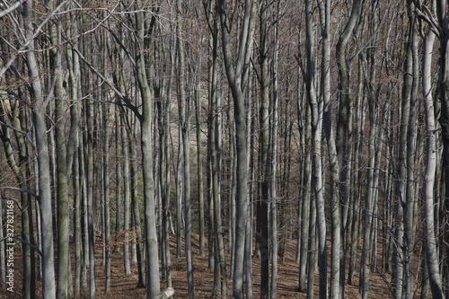 Jesienny krajobraz las szarych pni w słneczny dzień