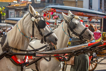 Two Horses Of Horse Carriage Ready To Pick Up Tourists In Buyukada, Princes Islands Off Istanbul, Turkey