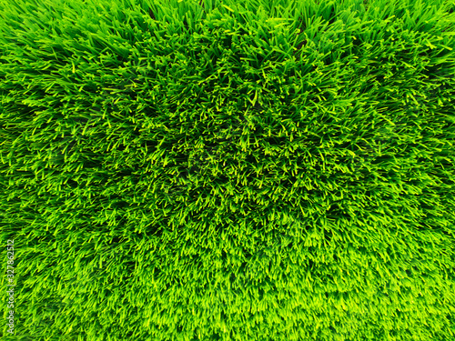 Beautiful green grass background texture and environment concept, green field graden - 327862512