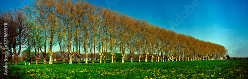 Photo An avenue of trees in the nearby countryside of Arles in Provence South ofFrance