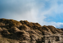 Grass Blowing On Sand Dunes, B...