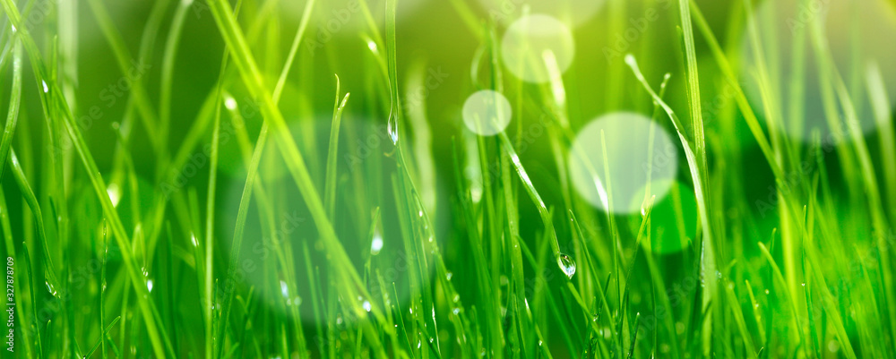 Fototapeta soft blur green grass background