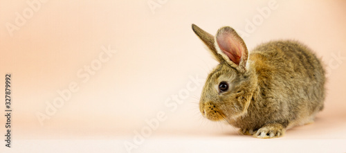 Rabbit on a beige background. Easter grey hare on a pastel pink background. Concept for the Easter holiday. Grey rabbit with a place for your unique text .