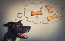 Joyful Border Collie Dog Looki...