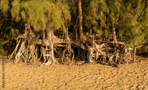 Canvas Print Panoramic view of the erosion to Ke'e beach caused by sea waves under trees and