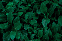 Leaf Texture Background With D...