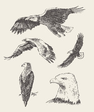 Collection Of Eagles Hand Draw...