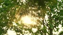 Sun Shine Through The Blowing ...