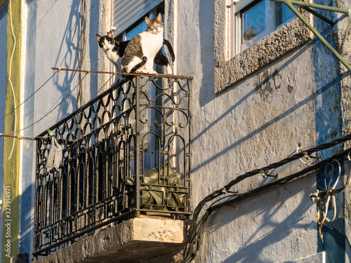 Photo two cats on a balcony railing