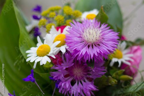 Fototapety, obrazy: Букет полевых цветов