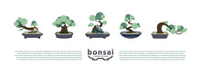 Bonsai Trees And Bonsai Pots S...