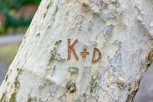 Scratched Letters On A Tree Tr...