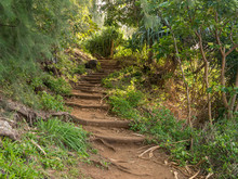 Steep Steps Made From Tree Roo...