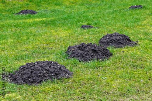 Papel de parede many fresh mole digs in a green meadow
