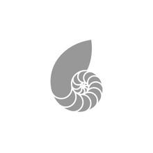 Nautilus Pompilius. Isolated Seashell On White Background