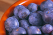 freshly harvested blueberries macro