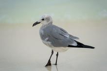 Close Up Of A Seagull Bird