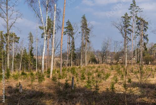 Fototapeta Beautiful green nature landscape of Europe obraz na płótnie