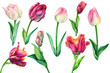 Watercolor flowers, set of beautiful tulips on an isolated background, hand drawing, spring card