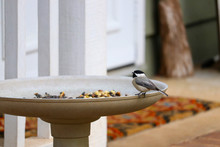 Black-capped Chickadee Perched On Bird Feeder Full Of Seeds, At The Front Entrance Of A House With Colorful Doormat In  Background.