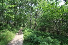 Wide Angle Shot Of A Shaded Trail Lined With Ferns And Weeds Under Tall Trees In Bornholm