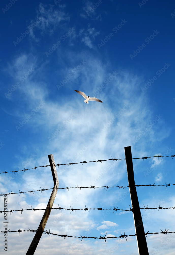 Fototapeta close up barbed wire fence and flying bird over sunny blue sky