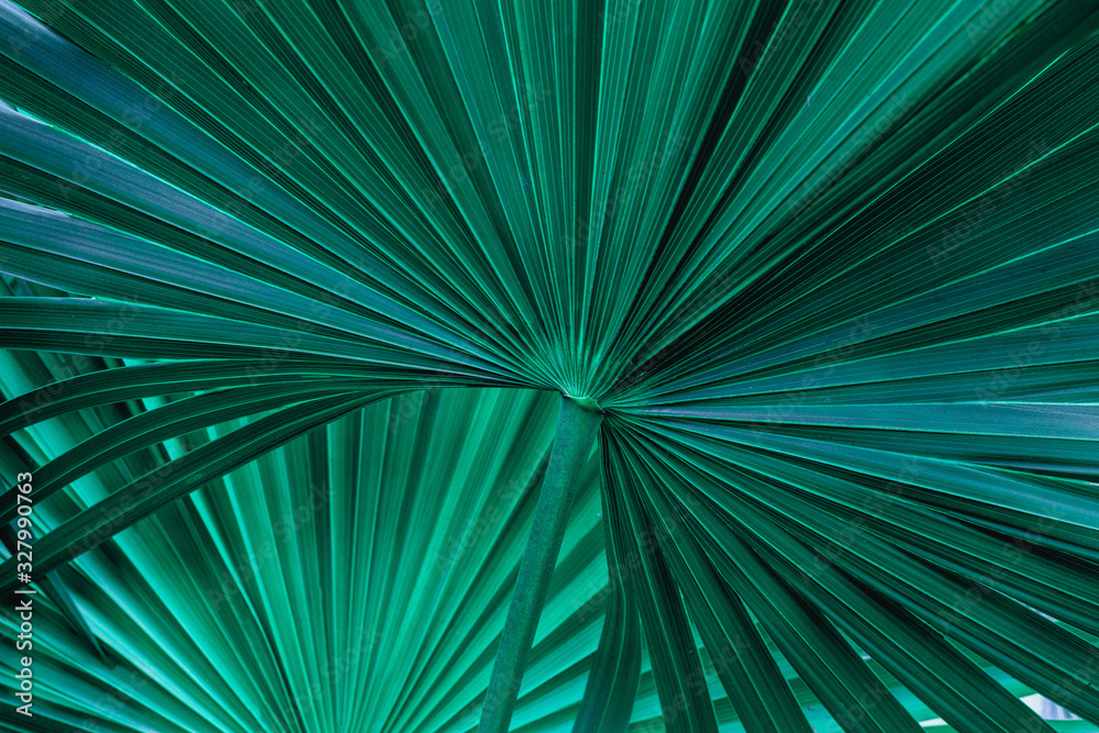 tropical palm leaf and shadow, abstract natural green background, dark tone textures