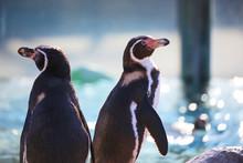 Good Friend Penguins