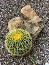 Barrel Cactus Rocks