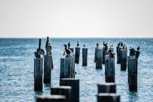 Birds Resting On Pier Poles