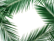 Palm Leaves Isolated On White ...