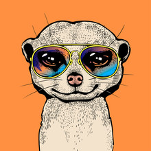 Funny Meerkat In Sunglasses