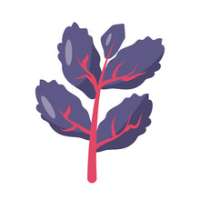 Red Lettuce Icon, Flat Detail ...