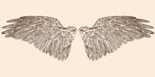 Two Spread Wings Of An Angel M...