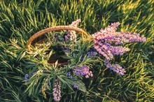 Beautiful Bouquet Of Lupins Fl...