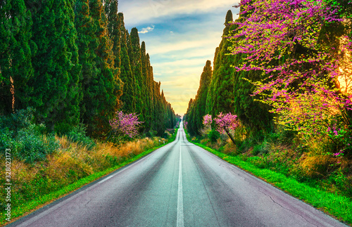 Leinwand Poster Bolgheri famous cypresses tree straight boulevard
