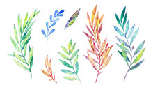Set Of Plant Elements On A Whi...