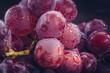 Makrofotografie von frischen, dunkelroten  Weintrauben mit Wasserspritzern auf dunklem Hintergrund