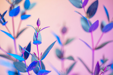 Creative neon background with leaves. Colorful abstract backdrop with vibrant gradients on plants. Exotic floral branch with pink and blue neon colors. Summer twigs with beautiful illumination