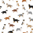 Australian shepherd dog seamless pattern. Different variations of coat color set